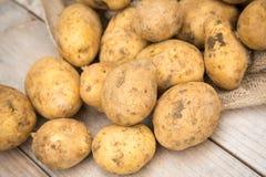 Dirty Raw White Potatoes Stock Photo