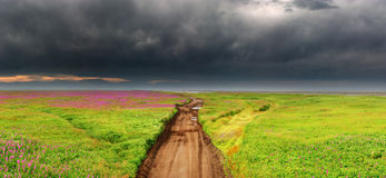 Dirty road in blossoming field Royalty Free Stock Photo