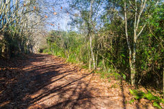 Dirty road with dry leaves in winter, Vale dos Vinhedos valley Royalty Free Stock Images