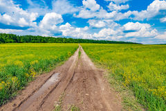 Dirty road on the field. Stock Photography