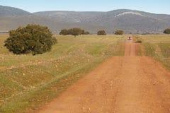 Dirty road in a mediterranean meadow. Cabeneros, Ciudad Real. Sp Royalty Free Stock Images