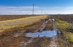 Dirty road between ripe sunflower fields in central Ukraine at late autumnal season. Landscape with dirty road between ripe sunflower fields in central Ukraine Royalty Free Stock Photography