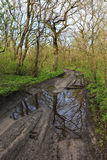 Dirty road in spring forest Royalty Free Stock Photos