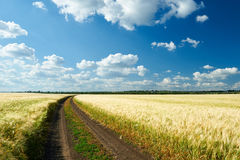 Dirty road on wheat field summer landscape Stock Photos