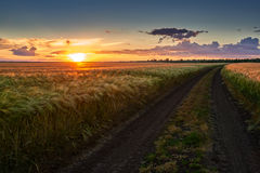 Dirty road on wheat field at sunset Stock Photography