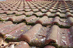 Dirty roof tiles requiring cleaning. Dirty roof tiles with dense moss requiring cleaning Stock Image