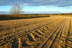Dirty rural road and cloudy blue sky Royalty Free Stock Image