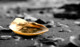 Dirty Sea Shells on the ocean Stock Photos