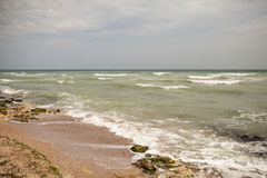 Dirty sea water full of seaweed Royalty Free Stock Images