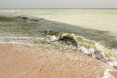 Dirty sea water full of seaweed Royalty Free Stock Photography