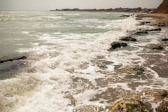 Dirty sea water full of seaweed Royalty Free Stock Photo