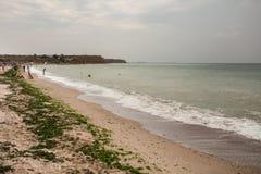 Dirty sea water full of seaweed stock photo