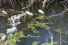 Dirty sewage and household rubbish in small river, irrigation channel causes rapid growth of algae. Water pollution. Ecological pr. Oblem. Problem of plastic stock image