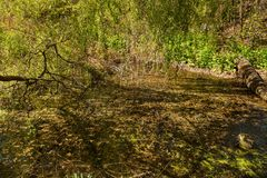Dirty Sewage, sewage system is drained into natural public pond Stock Photo