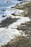 Dirty Shoreline. A shorline covered in dirty seafoam and debris Royalty Free Stock Photos
