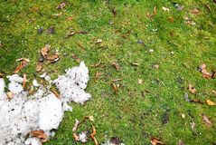 Dirty snow on green grass Stock Photo