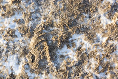 Dirty snow on walkway. In winter season. Dirty and snowy ground Royalty Free Stock Photos