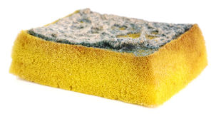 Dirty sponge Stock Photo