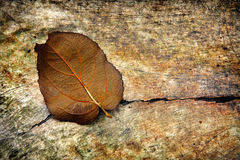 Grunge Background with a Leaf Stock Photography