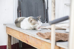 Dirty stray cat lick foot for clean on the table Royalty Free Stock Photo