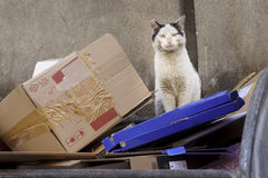 Dirty  stray cat standing on thrown cardboard boxes Stock Image
