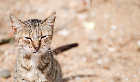 Dirty stray feral cat outdoors. Stock Photography
