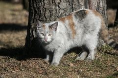 Dirty street cat. Dirty female homeless street cat closeup near tree trunk in a park outdoors in sunny winter day Stock Photo
