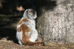Dirty street cat. Dirty male homeless street cat closeup near tree trunk in a park outdoors in sunny winter day Stock Images