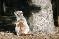 Dirty street cat. Dirty male homeless street cat closeup near tree trunk in a park outdoors in sunny winter day Stock Photography