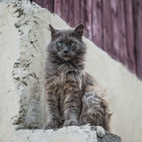 Dirty street cat sitting outdoors.  Stock Photos