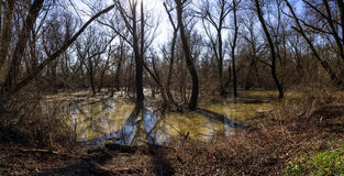 Dirty swamp area Stock Photography