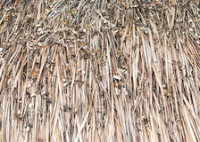 Dirty thatch Royalty Free Stock Photos
