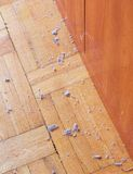 Dirty unswept wooden floor with dust. Dirty unswept wooden parquet floor with dust - hygiene concept Royalty Free Stock Photos