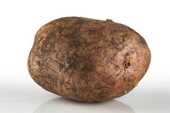 Dirty, unwashed potato Royalty Free Stock Photography