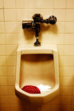 Dirty Urinal in Men's Room Royalty Free Stock Images