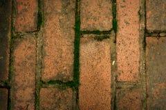 Vertical brick floor Stock Image