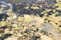 dirty water Zdjęcia Stock