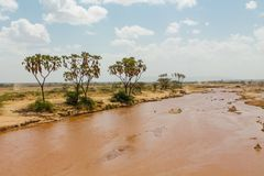 Dirty water river in desert, Africa. African Dirty water river in desert, Africa. Wild safari scenic landscapes of Africa with palm trees royalty free stock photos