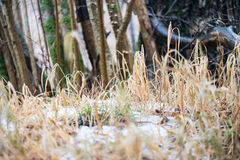 Dirty wet leaves in the snow Royalty Free Stock Photos