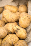 Dirty White Potatoes Stock Images
