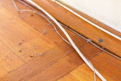 Dirty wooden floor with cables. Dirty unswept wooden parquet floor with dust and cables - hygiene concept Stock Image