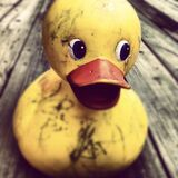 Dirty yellow rubber ducky Stock Image