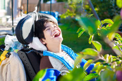 Disabled boy in wheelchair picking red apples off tree Stock Image