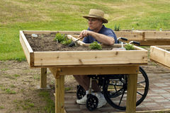 Disabled gardener. Disabled man in a wheelchair working at an enabling garden table Stock Photo