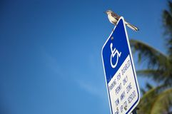 Disabled parking lot sign. A picture of a small bird, standing atop a disabled parking lot sign stock photography