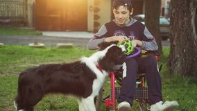 A disabled person plays with a dog, canitis therapy, disability treatment through training with a dog, Man in a. Wheelchair 4k stock footage