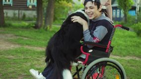 A disabled person plays with a dog, canitis therapy, disability treatment through training with a dog, Man in a. Wheelchair 4k stock video