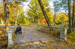 Disabled senior in Wheelchair, autumnal Park, Natural Light royalty free stock photo