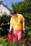 Disabled woman waters flowers in the garden Royalty Free Stock Image