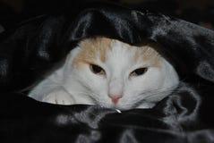 Disadora in black satin. Disadora taking a nap inside our satin bedclothes royalty free stock photo